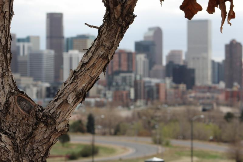 The science of city trees