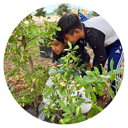 Young boys watering a tree on their school campus