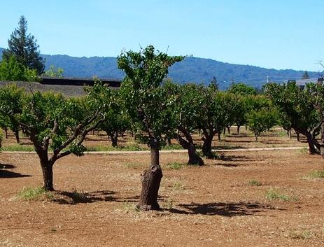 Silicon Valley has a rich history of orchards