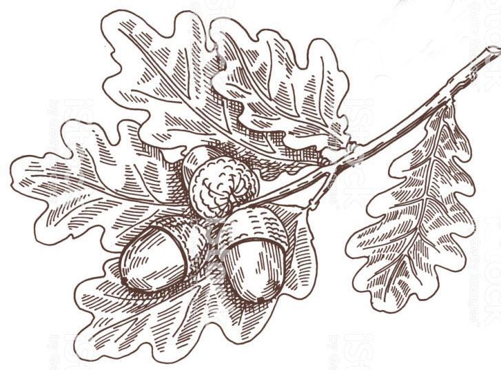 oak decorative branch