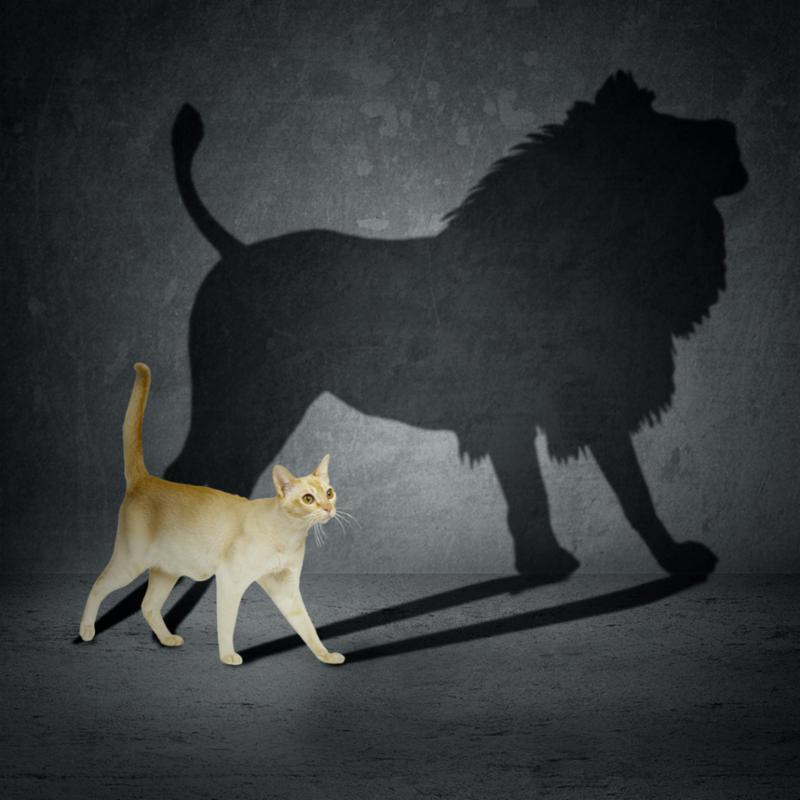 cat_with_lion_shadow.jpg