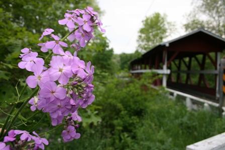 colvin bridge with flowers