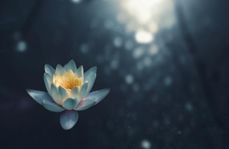 Mindfulness - zoltan tasi via unsplash