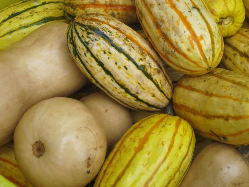 WinterSquash2