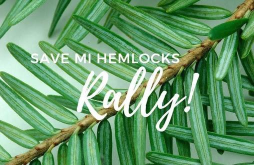 Hemlock branch with Save MI Hemlocks Rally text