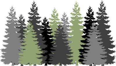 drawing depicting evergreen trees