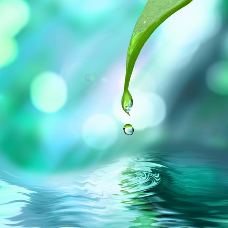 green_leaf_water_drop.jpg