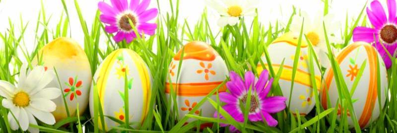 row_of_eggs_daisies.jpg