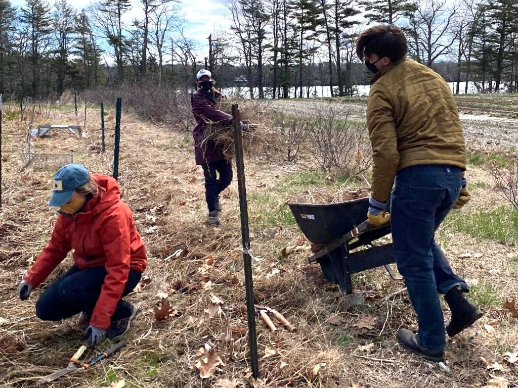 Resilience Corps Fellows work at Freeport farm