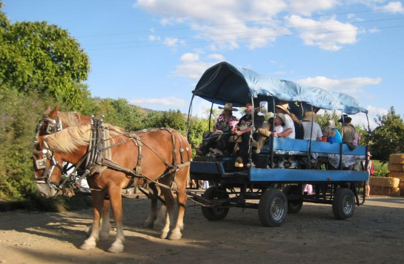 Horse-drawn hay ride at Full Belly Farm Hoes Down Harvest Festival