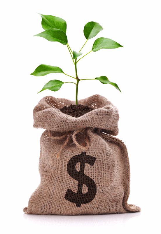 Money bag with dollar sign and money tree growing out of top isolated on white