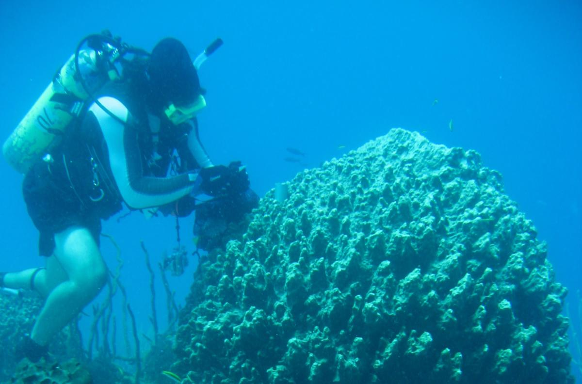 Jan Vicente dives on reef with sponges