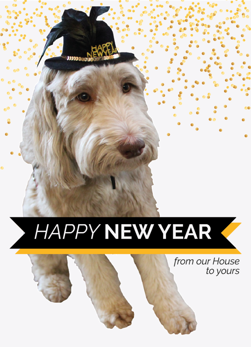 Chief Cheer Officer, Mac, with black & gold new year's hat on. Overlay text reads: Happy New Year from our House to yours