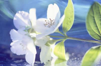 white-flower-side.jpg
