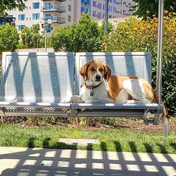 A dog sitting on a swing.