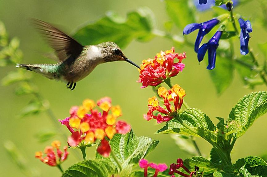 A humming bird hovering over a flower