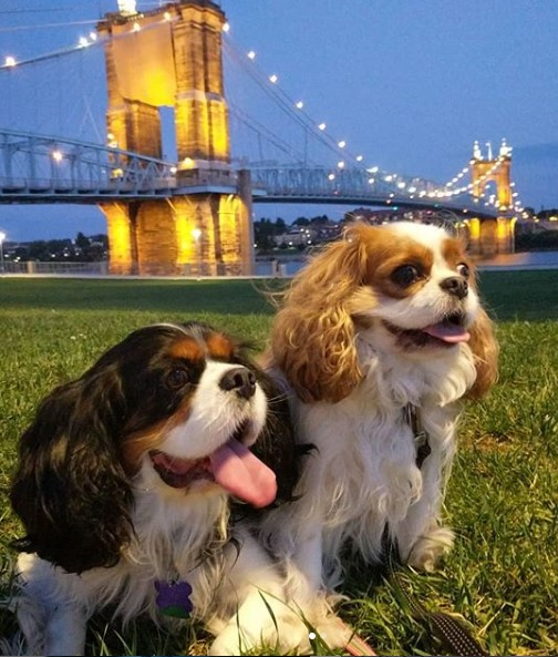 Two dogs in Smale Park