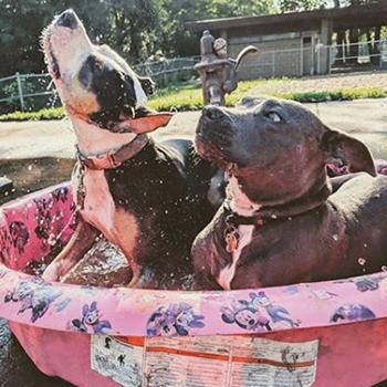 Two dogs splashing in a pool.