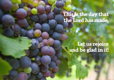 purple-grape-bunch.jpg