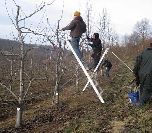 cold weather pruning