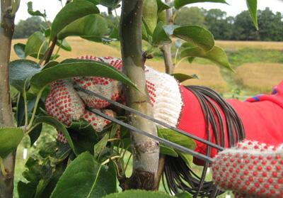 rubberband_around_the_tree