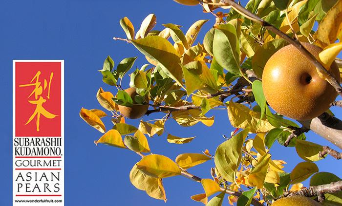 Asian Pears of August