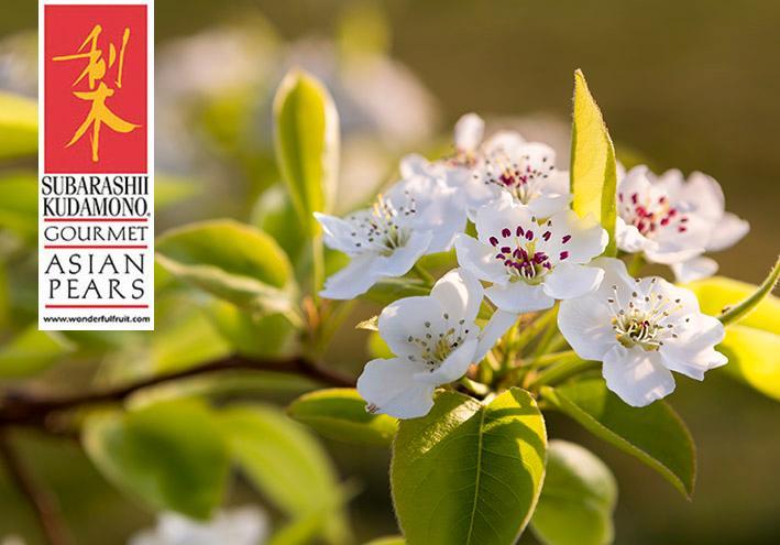 springtime_newsletter
