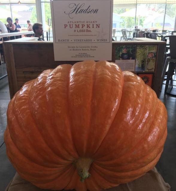 Hudson pumpkin