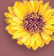 texture-yellow-flower.jpg