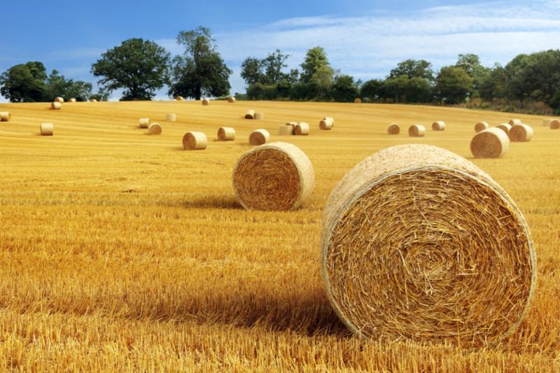 hay_bale_harvest_field.jpg
