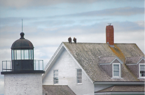 Eagles perched on lightkeepers house