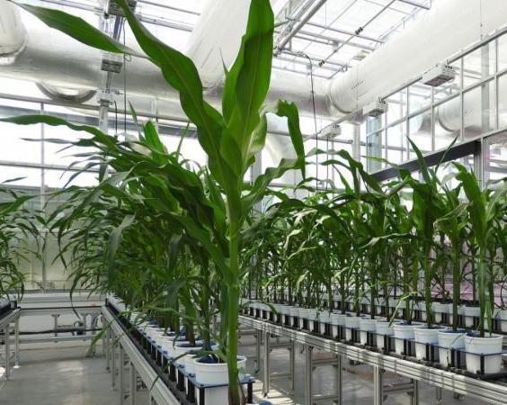 NIC greenhouse lab