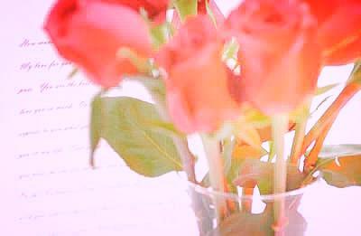 blurred-red-roses.jpg