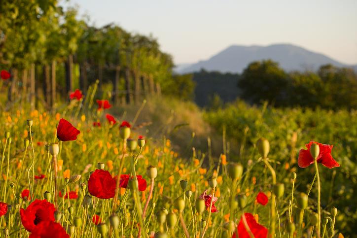 field_red_flowers.jpg