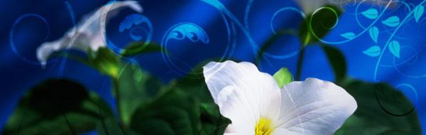 graphic-lilies-blue.jpg