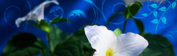 graphic-lilies-blue.jpg