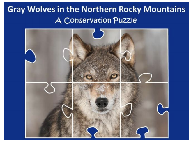 photo of wolf that looks like a jigsaw puzzle