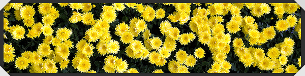 framed_flowers.jpg