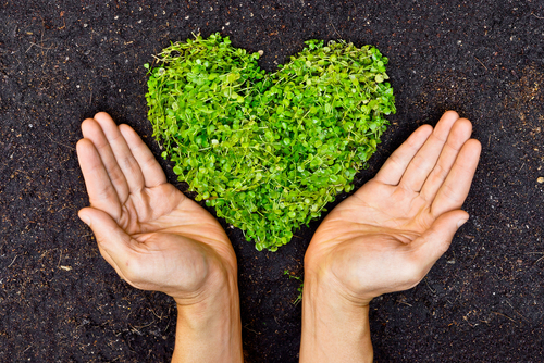 Hands holding green heart shaped tree    Love nature and save the world   Heal the world   Environmental preservation
