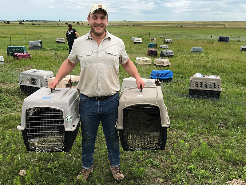 Ryan Klataske relocating prairie dogs at Niobrara Sanctuary