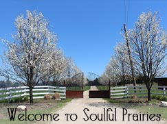 The gate at Soulful Prairies
