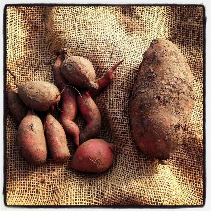 Baby Sweet Potatoes
