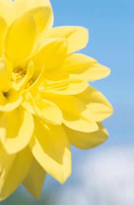 yellow-flower-closeup.jpg