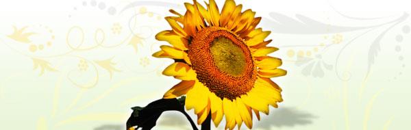 sunflower-design-header.jpg