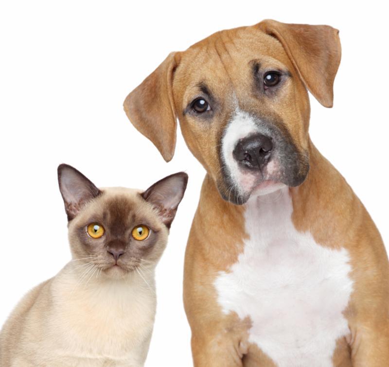 cat_dog_portrait.jpg