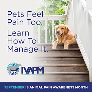 IVAPM pain awareness month graphic