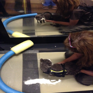 Sandy Gregory working with cat in water