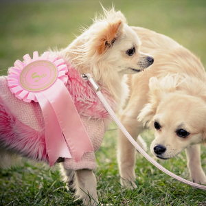 Dogs with prize ribbon