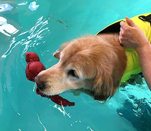 Murphy swimming in pool