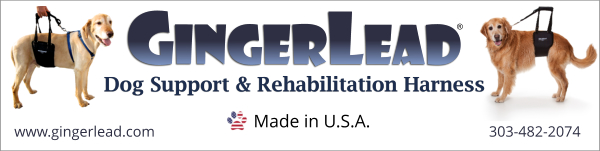 GingerLead banner ad